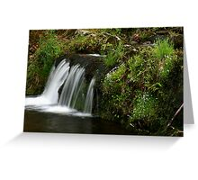 Spring Brook Greeting Card