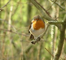 Beautiful Robin by Tom Wells