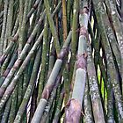 Bamboo 4 by DigitalMuse