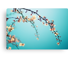 Blossoms in the Sun Canvas Print