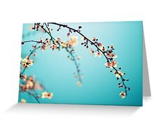 Blossoms in the Sun Greeting Card