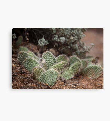 Green cactus in the Arizona desert, USA Canvas Print