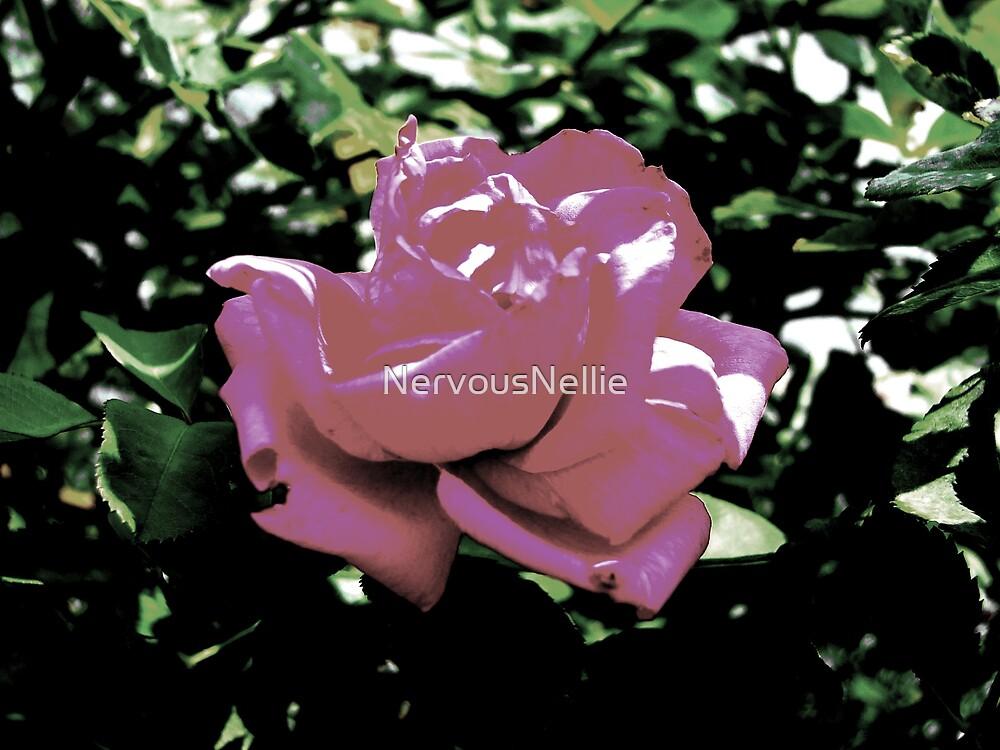Rose by NervousNellie