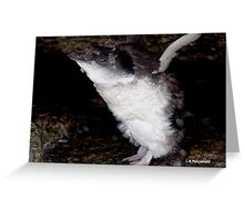 photoj 'Wow I'm Flying - Tas Penguin' Greeting Card