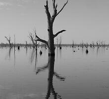 Lake Mulwala by drainbrain70