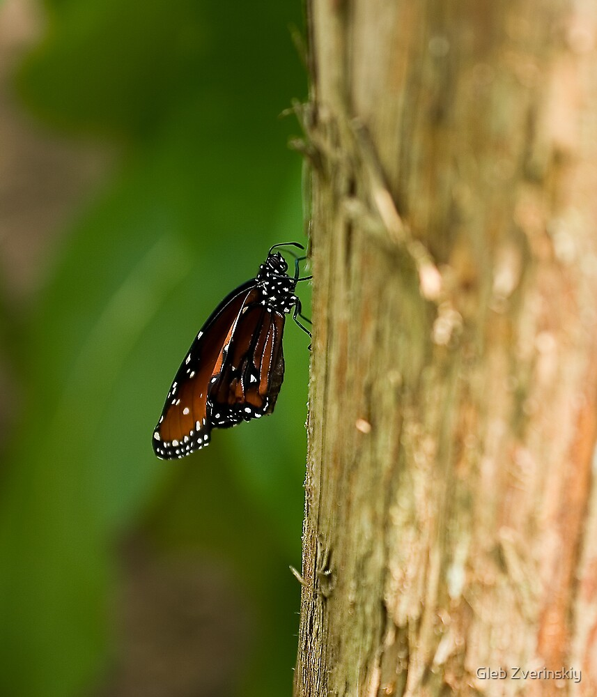 Butterfly on a tree by Gleb Zverinskiy