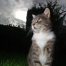 Tabby cat in garden at sunset by turniptowers