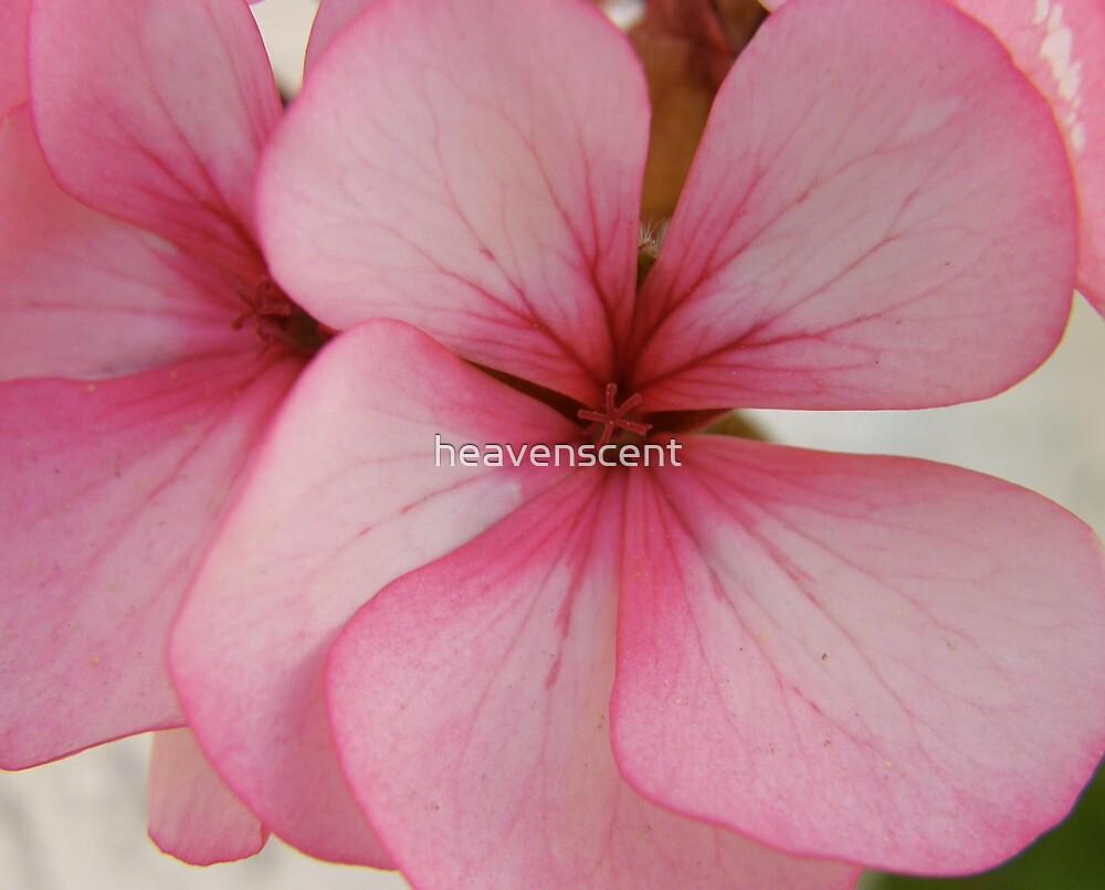 pink flower by heavenscent