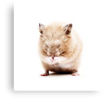 Sleepy Hamster Canvas Print