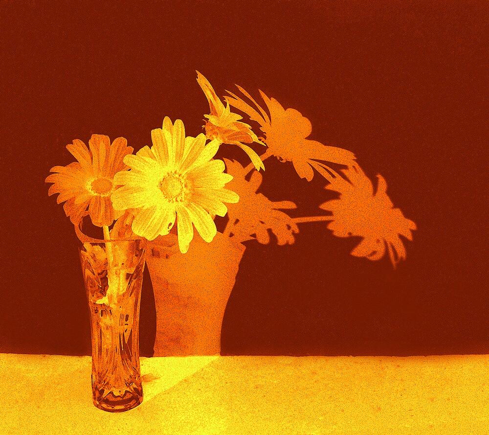 Daisies in orange by Carolyn