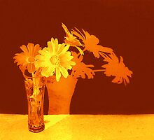 Daisies in orange by Carolyn