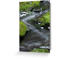 Angahook State Forest - Otways National Park Greeting Card