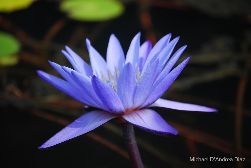 Blue Pond Lily 2 by Michael D'Andrea Diaz