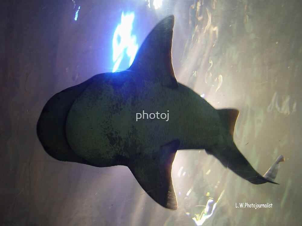 photoj  sea creature - shark by photoj