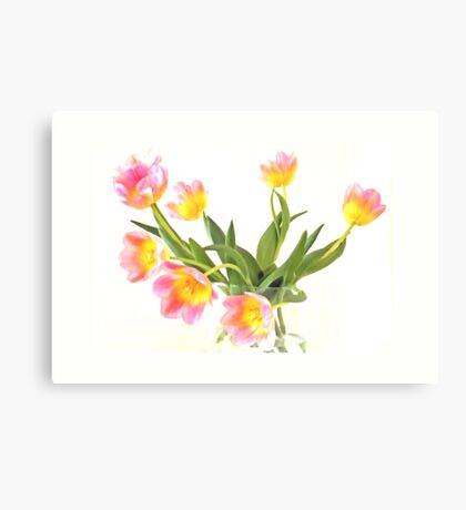 pink tulips Canvas Print