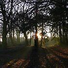 Sunset darlington park by Wrigglefish