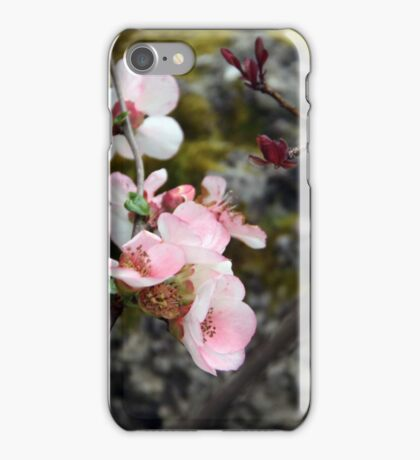 Quince buds iPhone Case/Skin