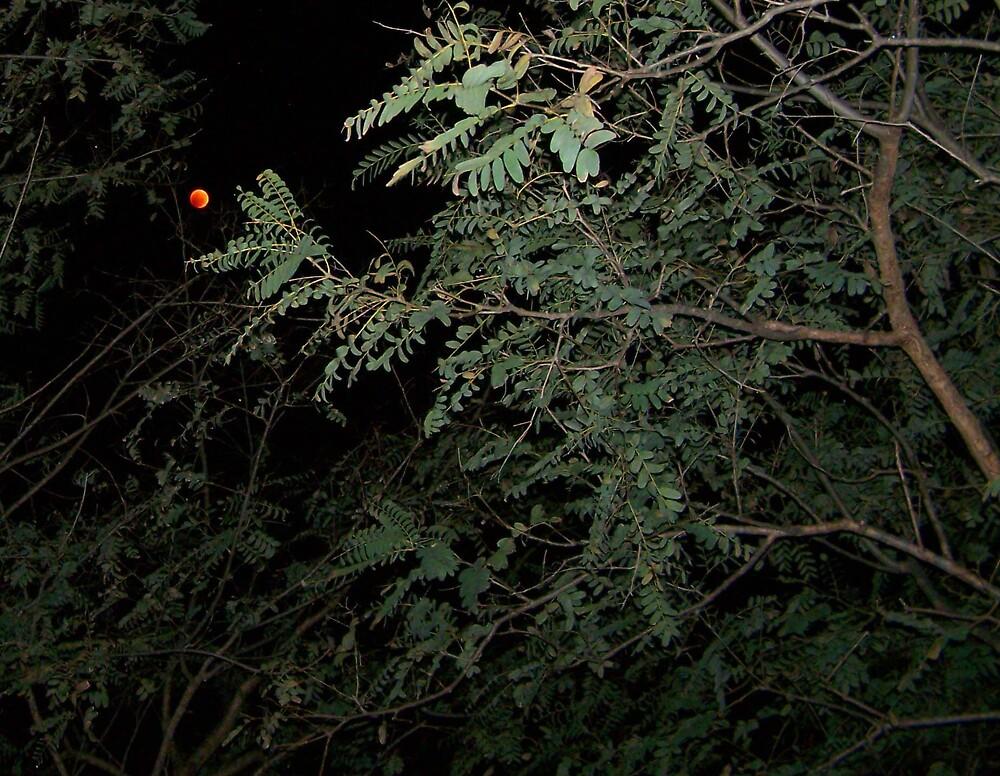 Eclipse In Brisbane. by aperture