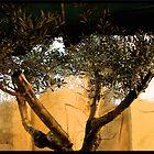 Olive Shadows by Valli  aka Frankiesgirl
