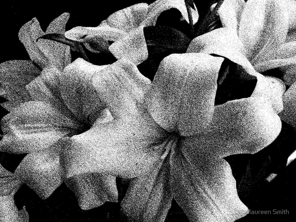 Black and White Lily by Maureen Smith