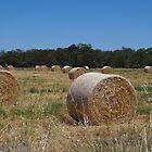 Hay Bales in Western Australia by lezvee