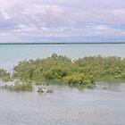 roebuck bay mangroves midday by Elliot62