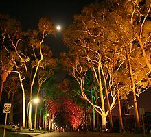 Kings Park II by slj1122