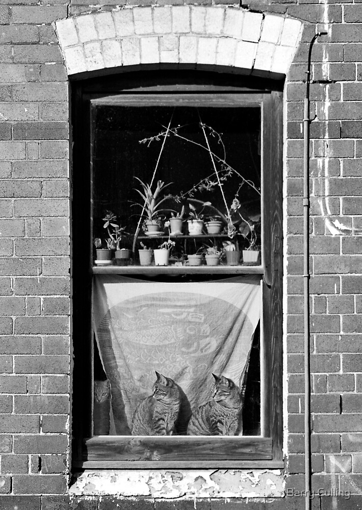 Woolloomooloo Window with Cats by Barry Culling