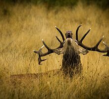 Let the rut commence by Martin Griffett
