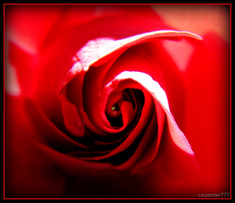 Red rose by carpenter777