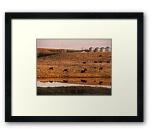 Cows reflection Framed Print