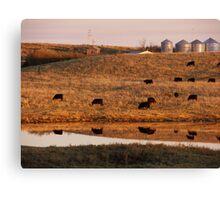 Cows reflection Canvas Print