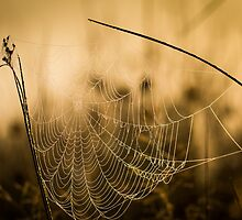 Web by Martin Griffett
