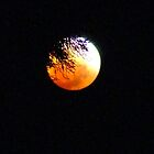 Lunar Eclipse Through the PineTree by Beccaboo