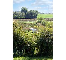 lone horse feeding Photographic Print
