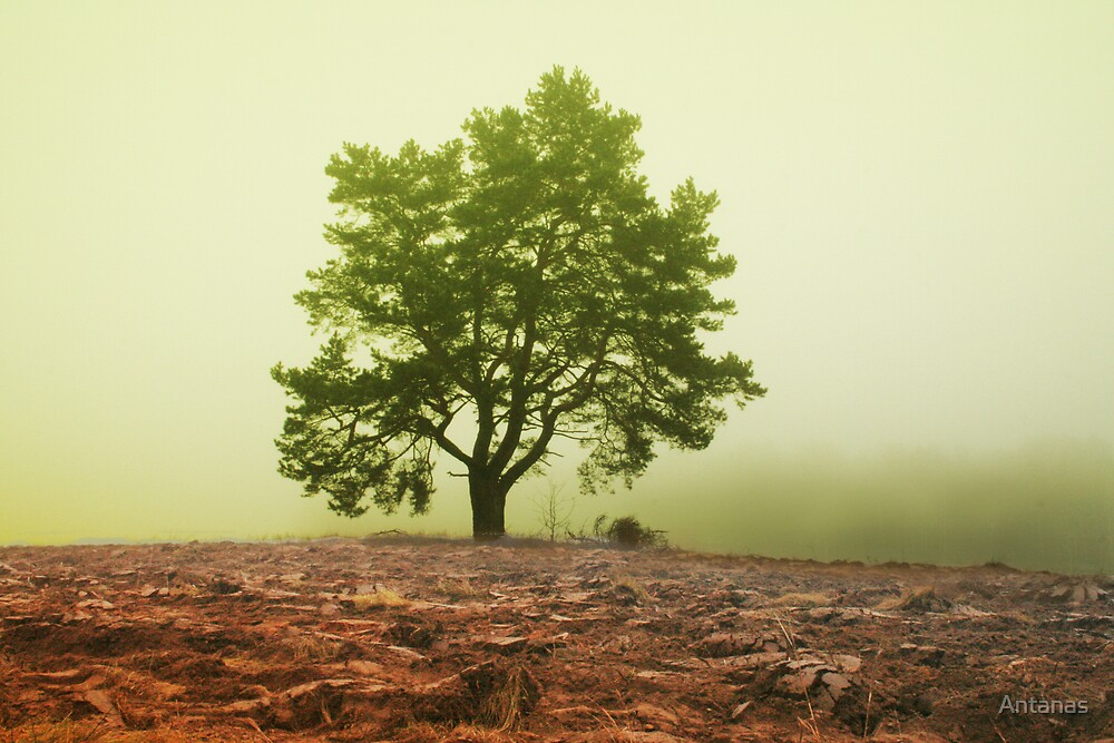 The tree in fog by Antanas