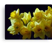 daffodilDay#3 Canvas Print