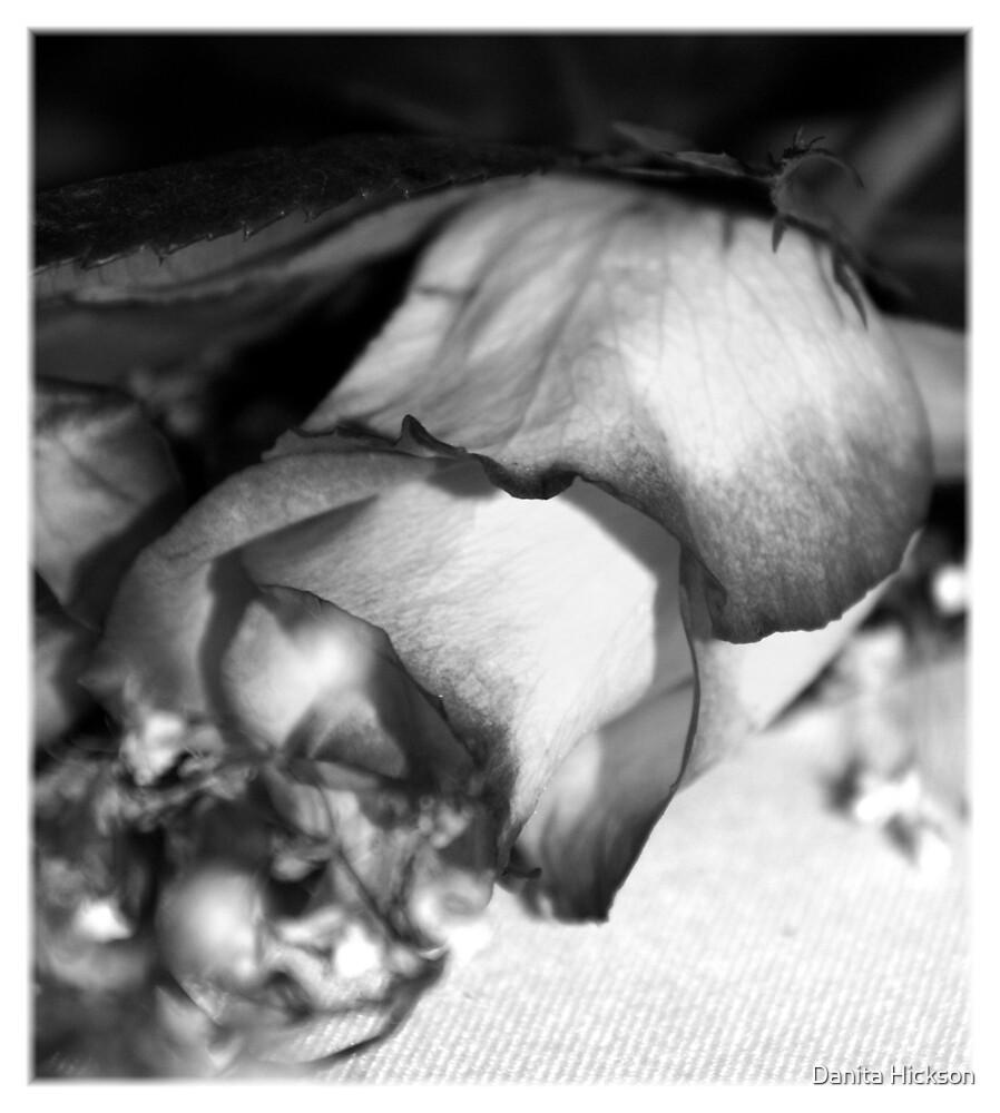 The Rose by Danita Hickson