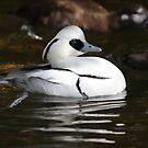 Duck by Steve Hunter