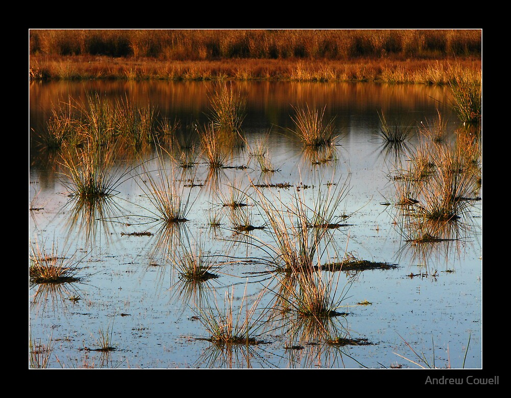 reeds by Andrew Cowell