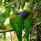 Love Birds by Chris Annable