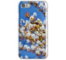 Shad Tree in Blossom iPhone Case/Skin