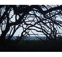 Through the Branches Photographic Print