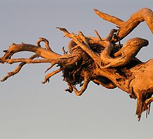 Galloping Tree by ARTstanding