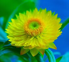 Fuzzy Yellow by John Velocci