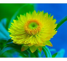 Fuzzy Yellow Photographic Print