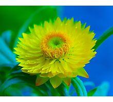 Fuzzy Yellow Photographic Print