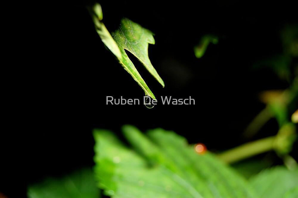 In the spotlight by Ruben De Wasch