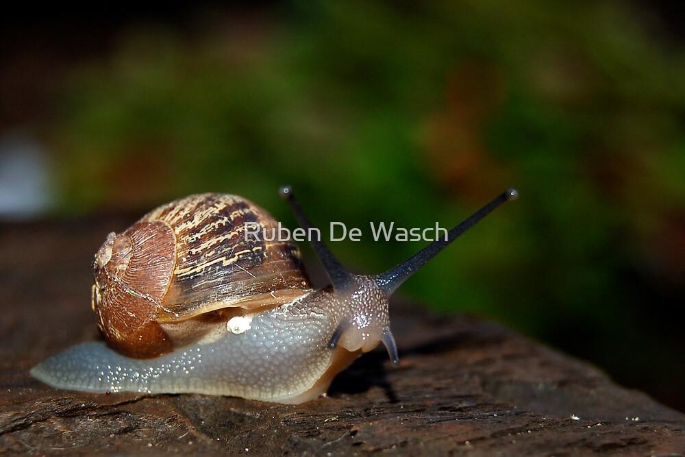 Snail by Ruben De Wasch