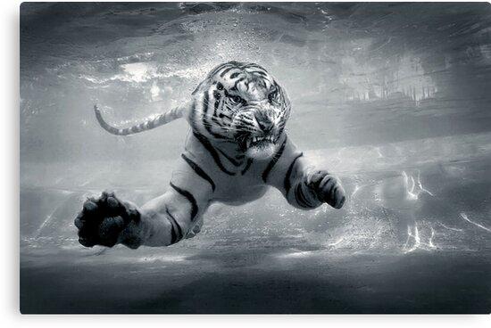 Underwater Danger by Jeff Rayner